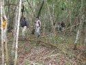 Jungle Trek, El Mirador